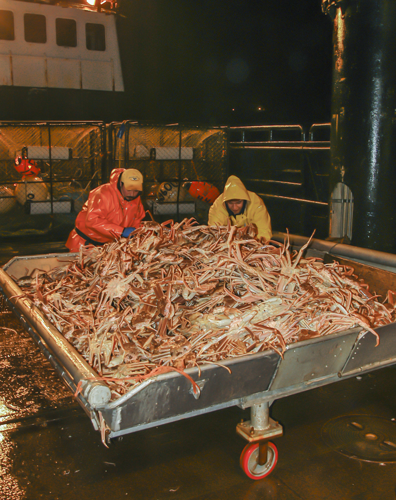Crab boat sorting opilio crab in Alaska